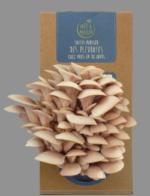 Faites pousser des champignons à la maison