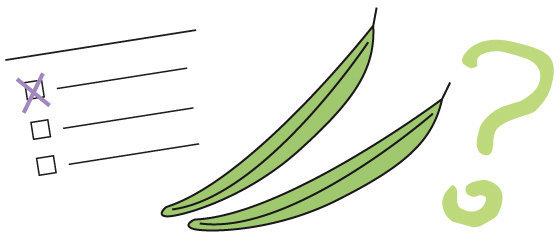 Quiz n°22 - le haricot vert