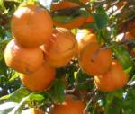 9 Vrai-Faux sur l'orange