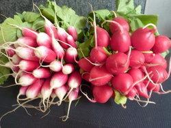 Nutrition : le radis, une légèreté croquante !