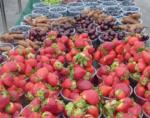 Nos pratiques alimentaires : quelle évolution ?